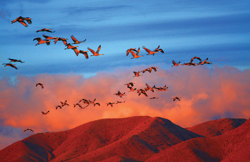 A flight beyond international borders: migratory birds travel several miles to visit India every winter